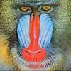 Click image for larger version.  Name:mandrill.png Views:273 Size:703.7 KB ID:2851